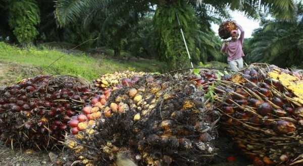The World Need Palm Oil