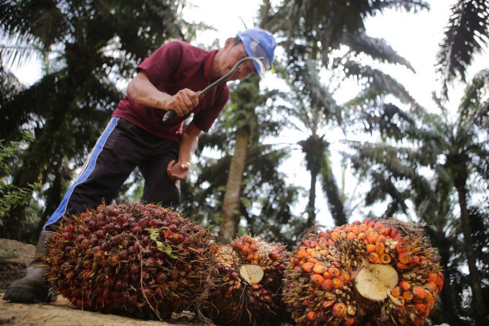 It's Time for a Stronger Palm Oil Partnership