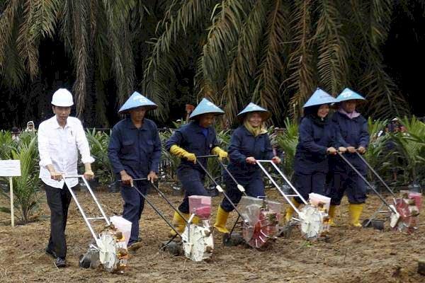 Musi Banyuasin Segera Panen Perdana Sawit Hasil PSR