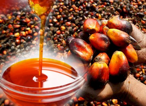 Red Palm Oil as Source of Vitamins for Combating COVID-19