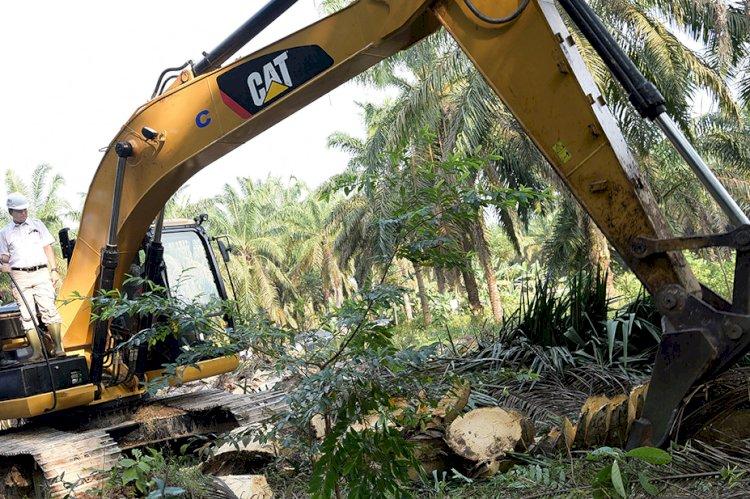 Terapkan Protokol Kesehatan, Replanting Sawit di Jambi Tetap Berjalan