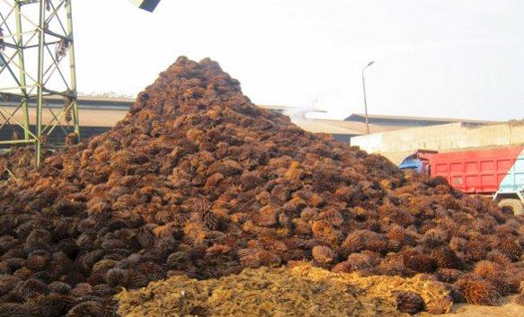 Biomassa Sawit, Sumber Energi Terbarukan