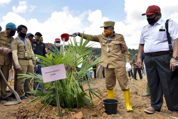 Jambi Relies on Oil Palm Replanting to Boost Economic Growth