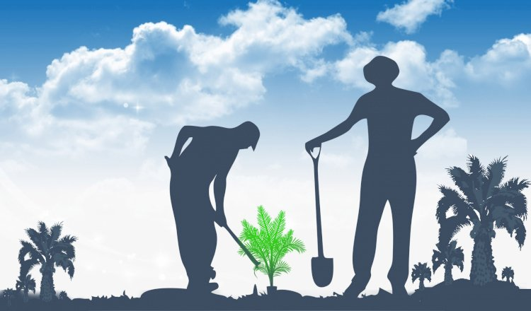 Program Peremajaan Perkebunan Kelapa Sawit