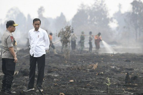 Govt Predicts Fewer Forest and Lands Fires This Year