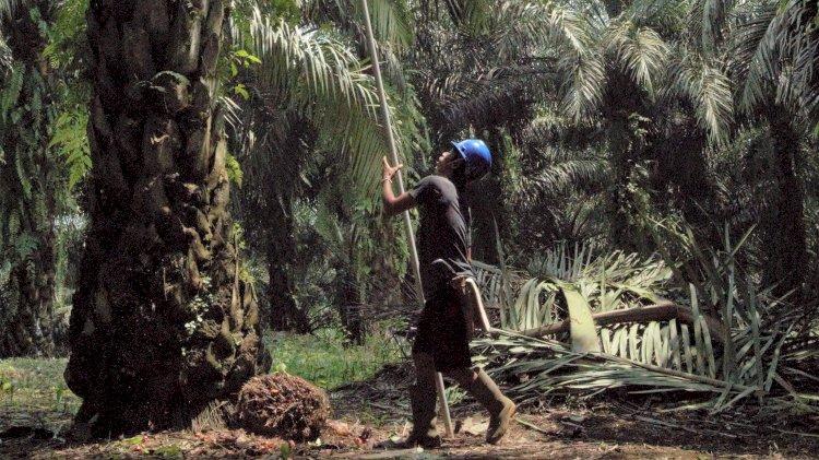 BPDPKS Ajak Jurnalis Mengenal Lebih Dekat Pengelolaan Perkebunan Kelapa Sawit