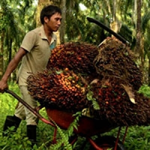 Palm Oil Matters to Indonesia's Economy