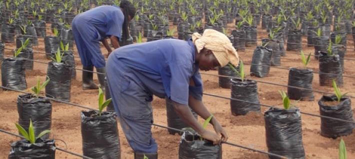 Indonesia Bantu Petani Sawit Uganda