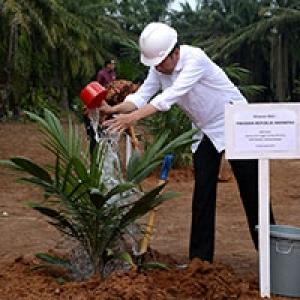 Peremajaan Kelapa Sawit, Petani Dapat Rp 25 Juta per Hektar