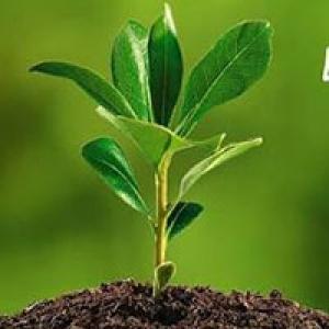 Sawit Indonesia, Sawit Berwawasan Lingkungan