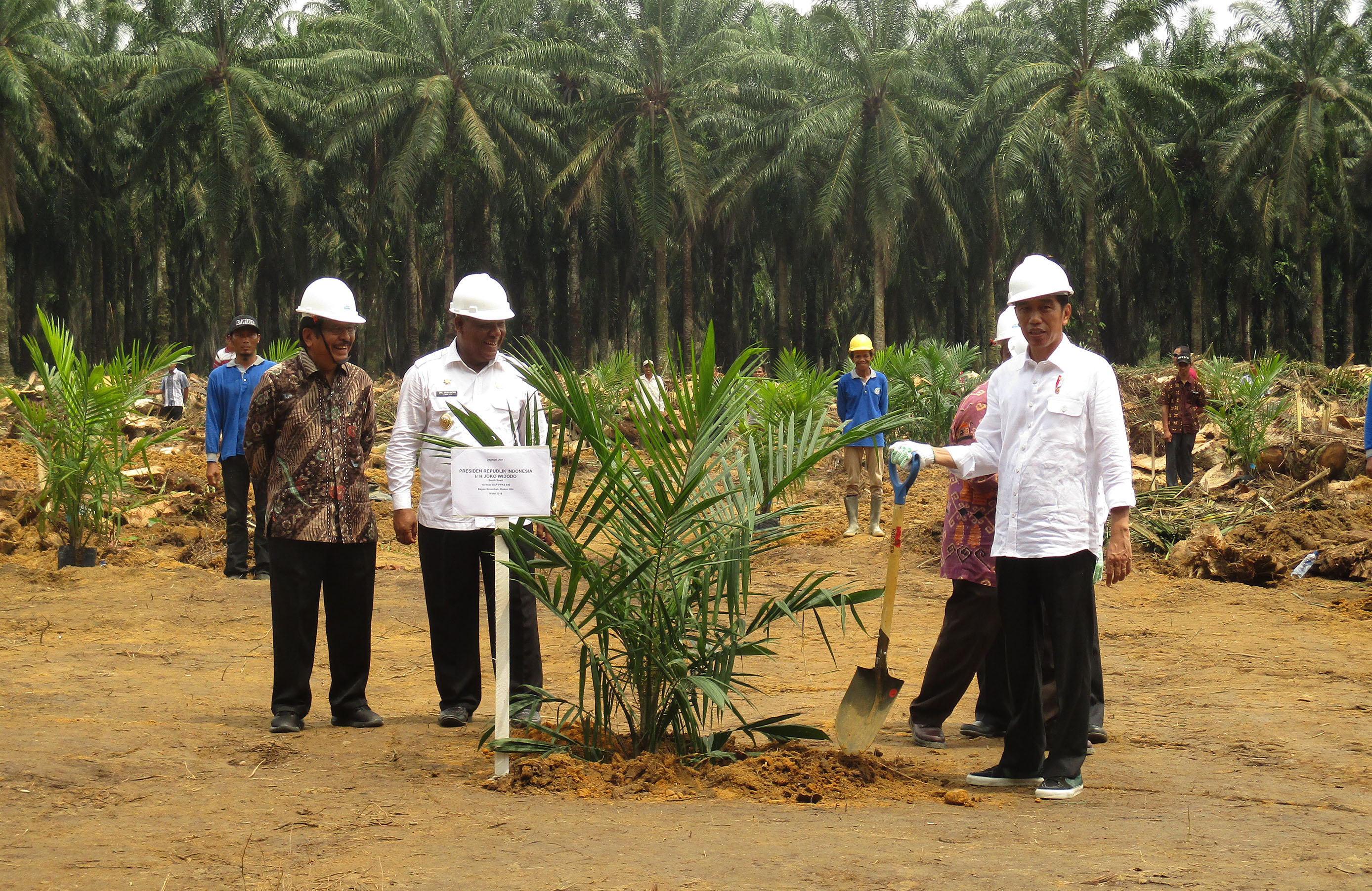 Beyond Oil Palm Replanting, a Story of Riau