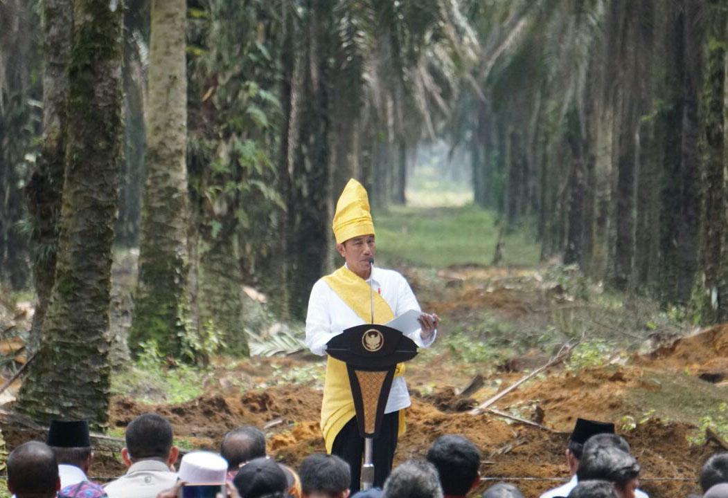 Jokowi Minta Percepat Penerbitan Sertifikat Lahan Sawit Rakyat