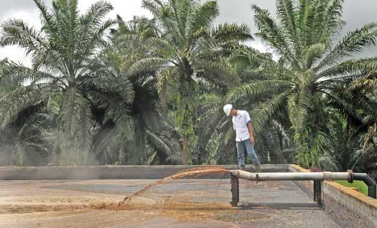 Limbah Cair Pabrik Sawit Diolah Untan Jadi Biogas