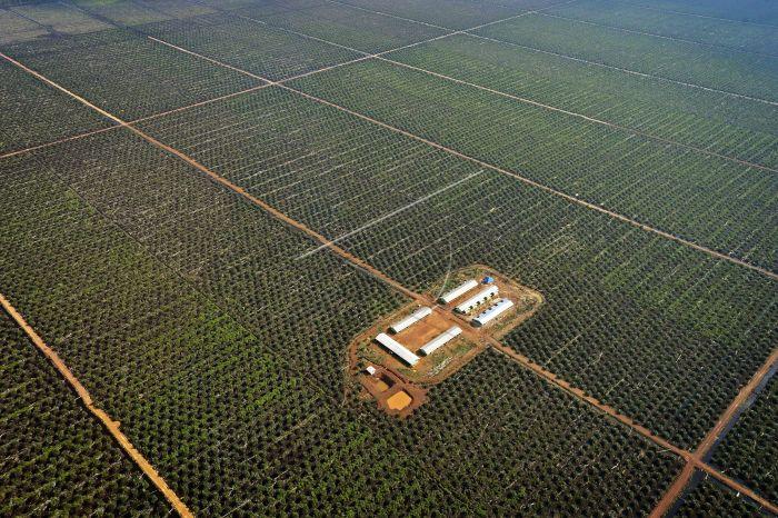 Investors To Build Palm Oil Mill in Kotim