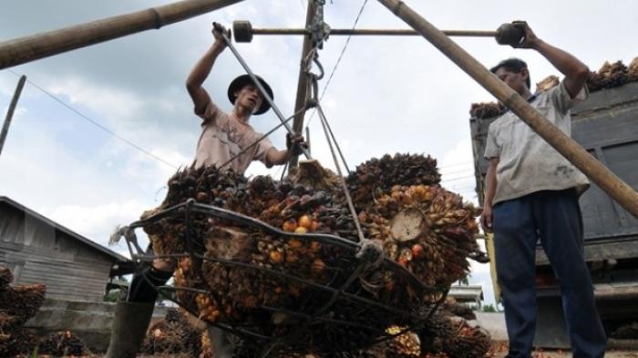 Peluang Besar Sawit Indonesia di Tengah Perang Dagang AS-China