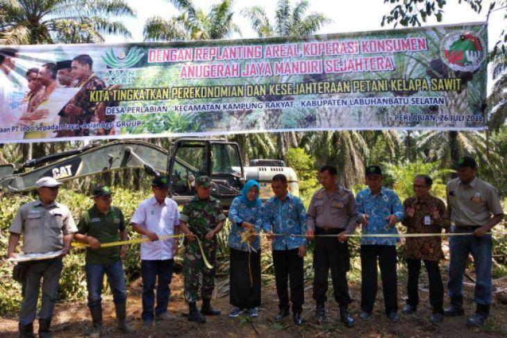 Oil Palm Farmers in Labuhanbatu Selatan Initiate Replanting