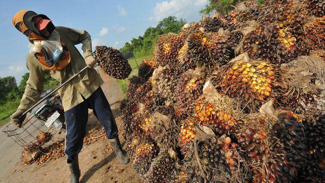 Pers dan Warganet Jatim Perdalam Pemahaman Perkebunan Kelapa Sawit