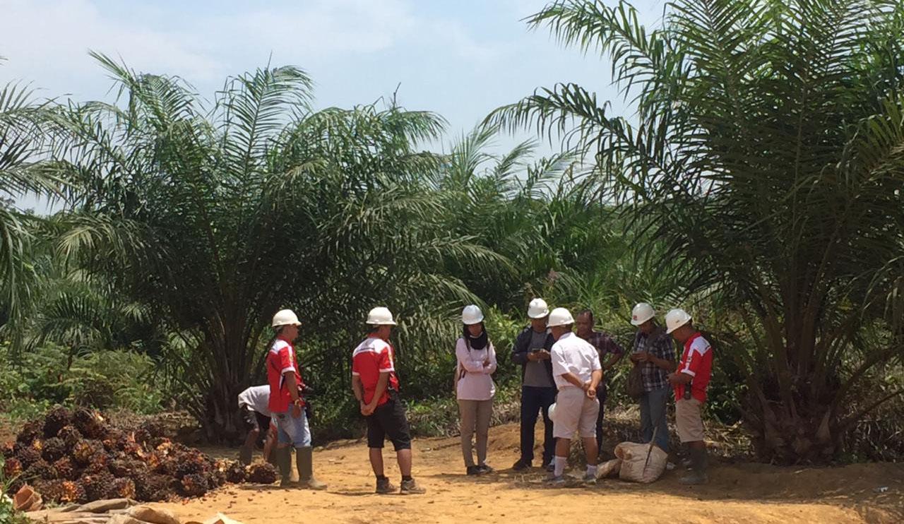 Participants of Journalist Fellowship Program Visit Oil Palm Plantation in West Kalimantan